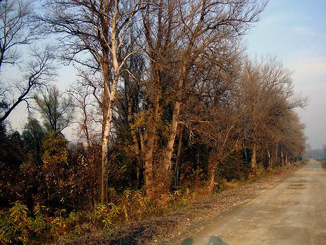 Обратная сторона Ады Циганлии. Дорога вдоль берега